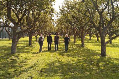 Bethlem Royal Mental Hospital restored orchard