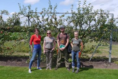 Summer Orchard Pruning