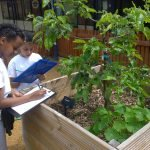 Ernest Cook Trust school orchard project