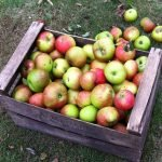 Cider: a seasonal tipple