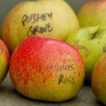 Photo of varieties of apple