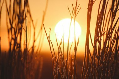 Sun rising over vegetation
