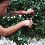 pruning trained forms