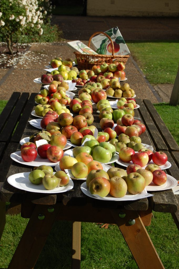 Plates of apples on a table