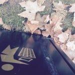 Pick up your litter & make leaf mould
