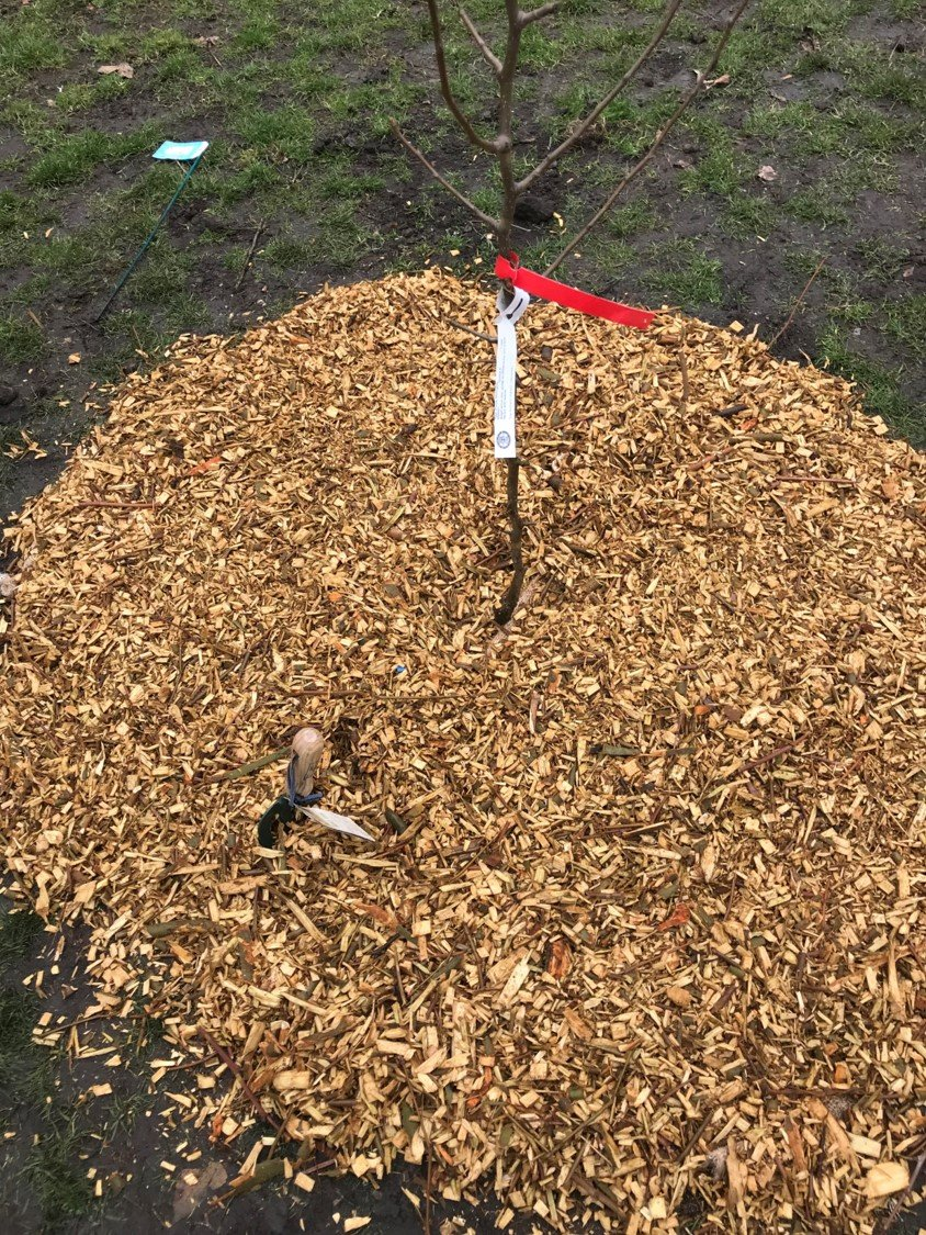 Fully mulched