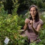 Jo Homan at Edible Landsacapes