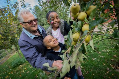 FREE interactive Guide to Celebrating Apple Day