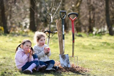 Looking to plant a new orchard, or improve an existing one?