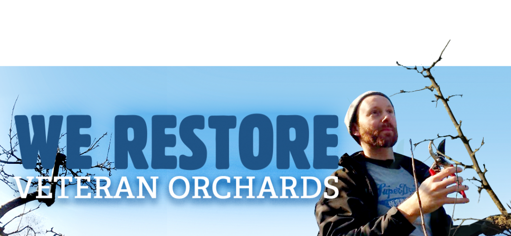We restore veteran orchards