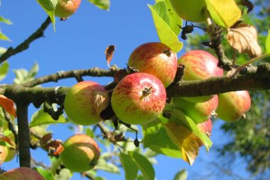 Orchards – Priority Habitats!