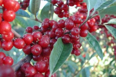 Fruit Trees need their Nutrient Fix
