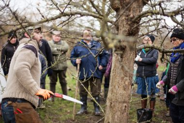 Dormancy, pruning & planning a wassail